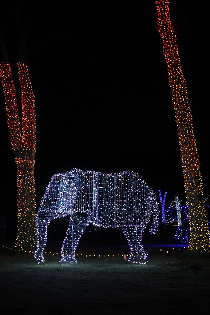 Detroit Zoo Christmas Lights.Detroit Zoo Christmas Lights Ward500 Flickr