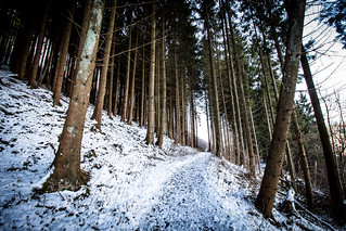 Path through snowy woods | by Groman123