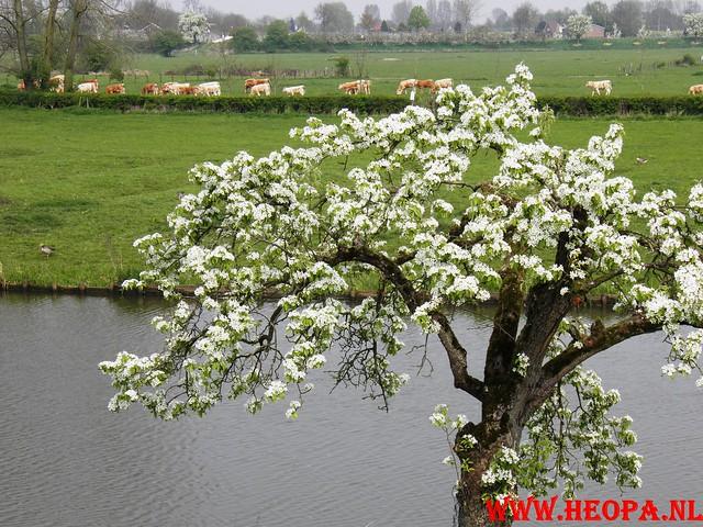 16-04-2011     Rode-Kruis   Bloesem   wandeltocht 26 Km (105)