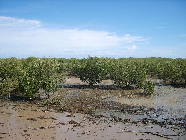 EAAF111 Roebuck Bay, Western Australia