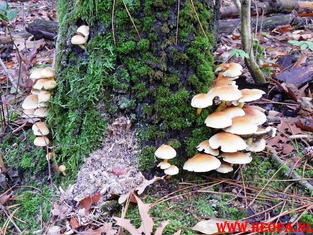 22-10-2011             Driebergen         26 km (53)