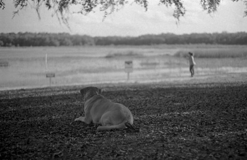 Watchful (Leica M3) | by PositiveAboutNegatives