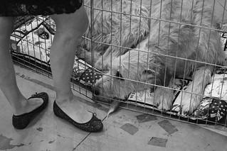 un día de perros | by bassmatroncomplex