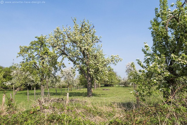 Streuobstwiese / Meadow orchard 13