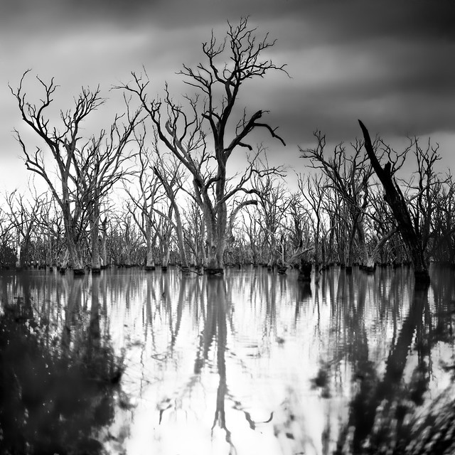 Ghosts of Flooded Gums
