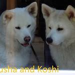 DSC08063.jpgKusha and Koshi