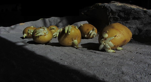 An Alien Spud/Potato Diorama The Moon Surface - 3 Of 18 | by Kelvin64