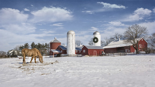 animal barn blue bluesky brown building clouds country countryside daytime farm fence field hay horse landscape nature old outdoors outside red scene silver snow space story straw sunny tail texture textured trees white wildlife windows winter winterscape wood wooden yellow