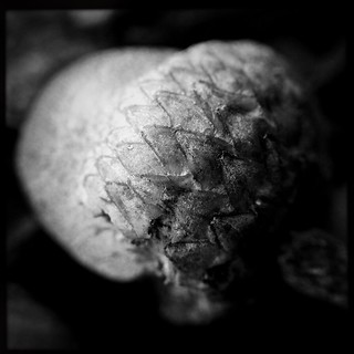 Long Acorn This Acorn Is Another From The Archive For Macr