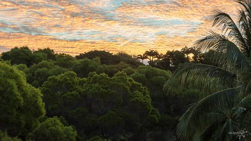 trees sky usa clouds sunrise palms hawaii us unitedstates pacific pacificocean waimea bigisland pazifischerozean dirkkirchner unforgivenartde