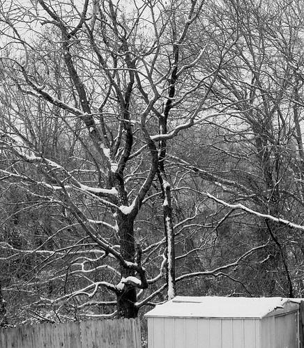 snow blackwhite irphotography ashevillenc ashevillenorthcarolina snowontreebranches katharinehanna