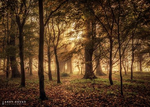 morning trees england mist sunrise woodland golden unitedkingdom sony goldenhour a77 wittenhamclumps southoxfordshire littlewittenham sonyalpha andyhough earthtrust slta77 sonyzeissdt1680 andyhoughphotography