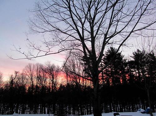 sunset woods backyard westbranch putnamcounty carmelny treesillhouettes winter2015 nycsreservoir