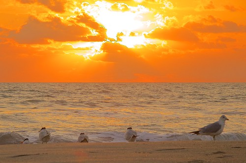 ocean beach birds sunrise dawn surf florida indialantic