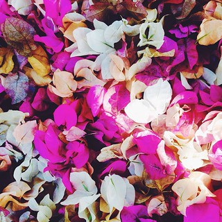 Pretty petals #sharjah #national park #flowers | by amycwhitehead
