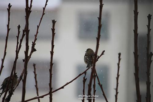 snow nature canon amman jordan dslr housegarden