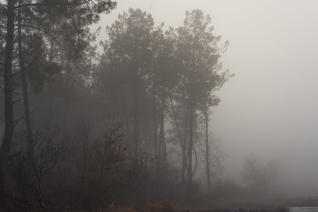 Fog on the land - Brouillard sur la lande