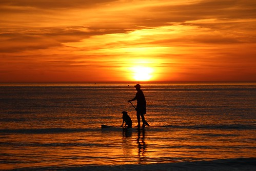sunset dog man water mexico surf gulf smooth golds oranges yellows siestakey paddleboard