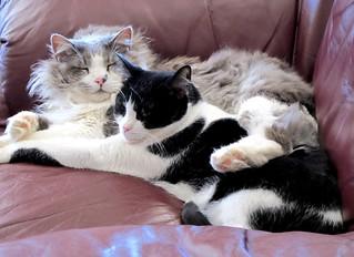 a tale of two kitties | by frankieleon
