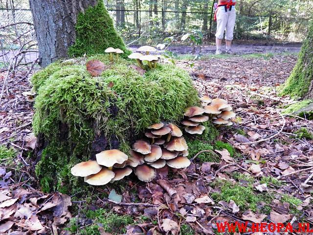 22-10-2011             Driebergen         26 km (144)