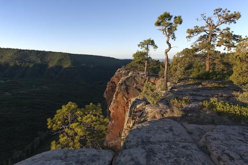 uncompahgreplateau leonards ridgemassey branch colorado landscape sunrise dawn mountains conifers