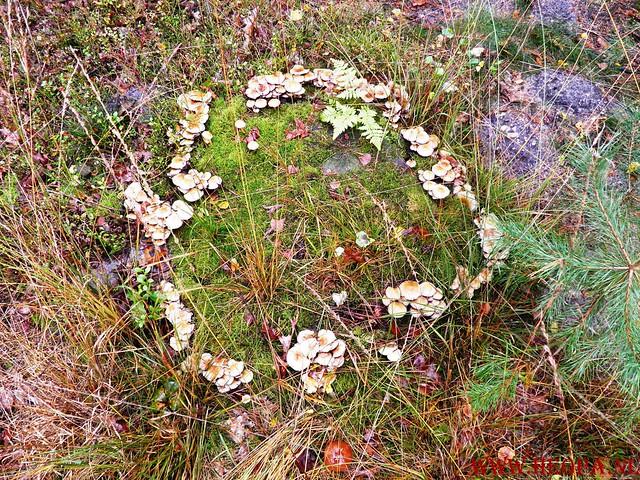 20-10-2012     Wedeblick-   Driebergen        25 Km (116)