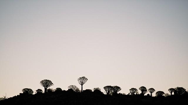 quiver tree land