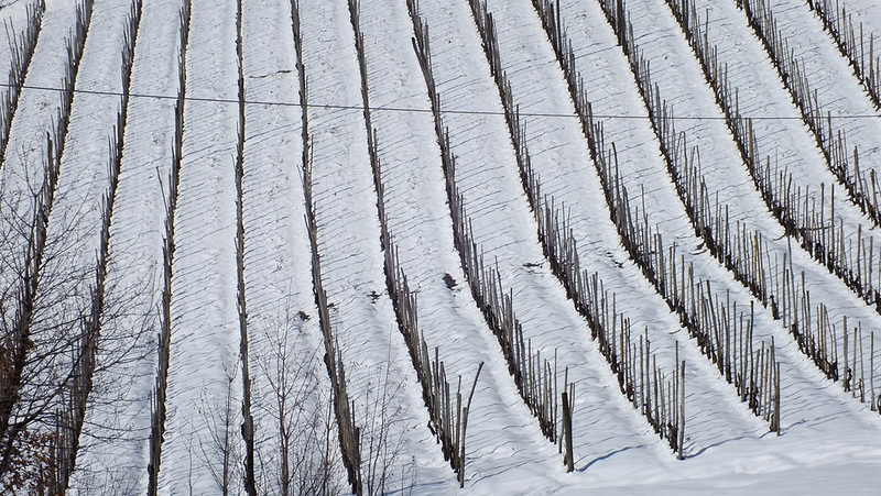 La vigna riposa nella neve