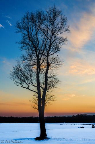 winter sunset color tree bird nature clouds burlington newjersey nikon unitedstates wildlife springfield mercersodfarm