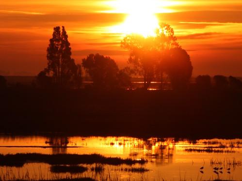 california trees usa silhouette northerncalifornia sunrise golden pond unitedstates sanfranciscobayarea sacramentodelta sanfranciscobay marsh fairfield suisunbay parishrd goodyearrd morrowisland