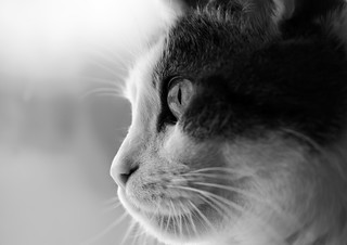Cat | by Photo By Manka