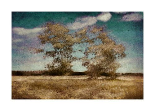 trees landscape manitoba icm
