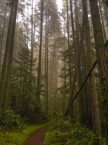 trees britishcolumbia forestlight importedkeywordtags morrellbirdsanctuary
