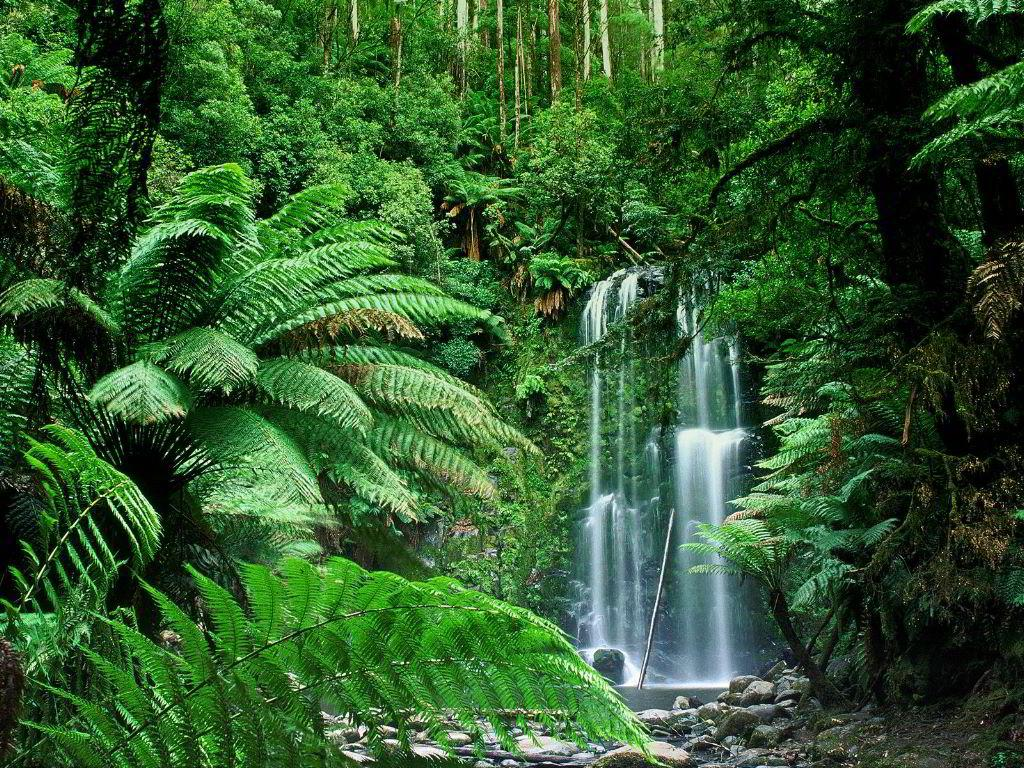 Tropical Forest Wallpaper Nature Wallpaper Tropical Fore