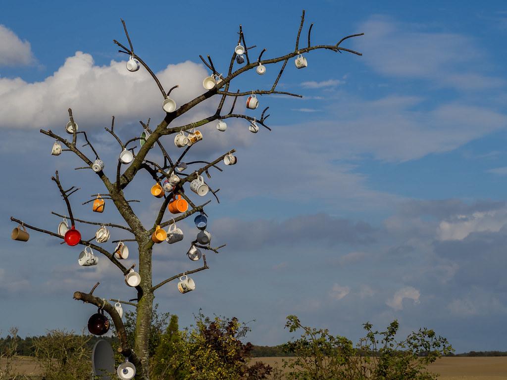 FlickrFriday: #Unusual Cup Tree