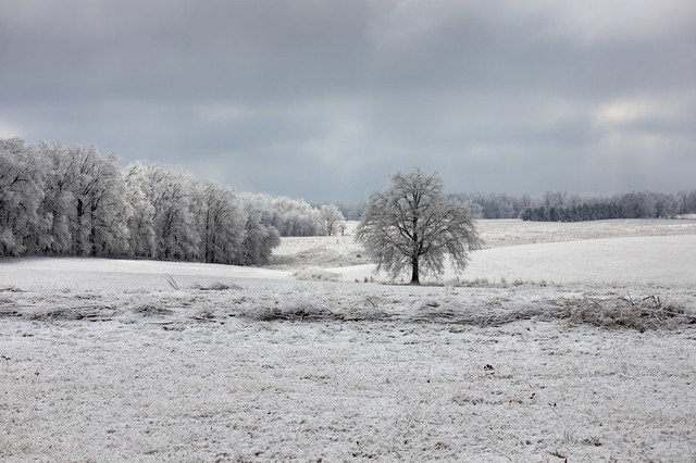 Field, White County, Tennessee