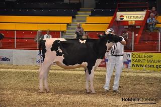 05 août 2016 - Jugement Holstein Expo St-Hyacinthe 2016