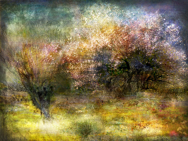 Ruralscape #20 (Two autumns)