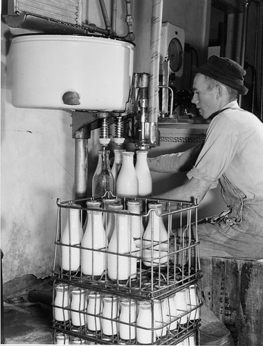 Male Dairy Worker / Laitier