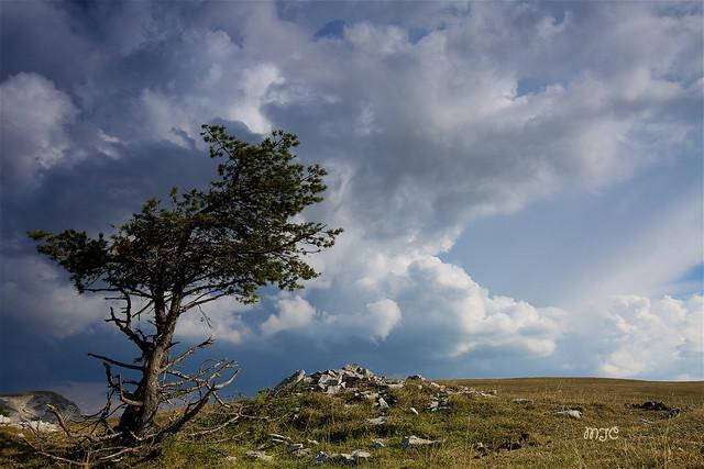 Le solitaire du plateau de Font d'Urle... The solitaire of the plateau of Font d'Urle ...