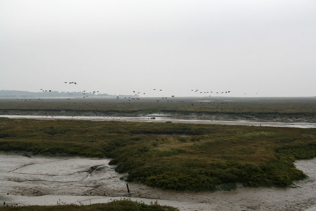 Marshes east of Wells-next-the-Sea