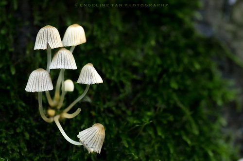 Fairy's chandelier | by Engeline Tan