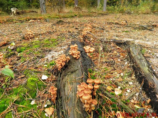 20-10-2012     Wedeblick-   Driebergen        25 Km (82)