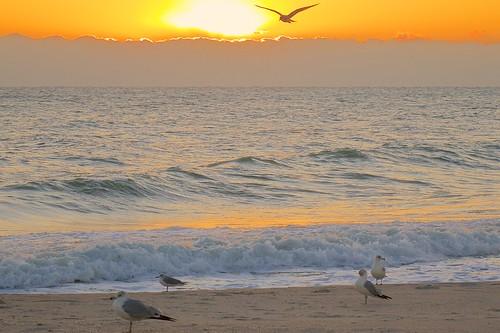 ocean bird beach sunrise dawn florida seagull indialantic