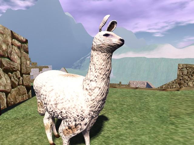 Machu Picchu - Inquisitive Llama