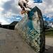 Sebastian Gonzalez Fs Boardslide