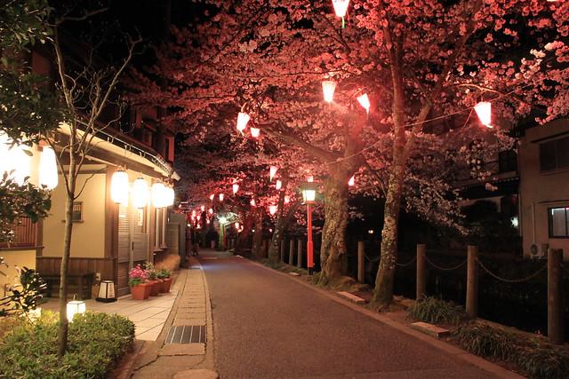 Sakura / Kinosaki Onsen