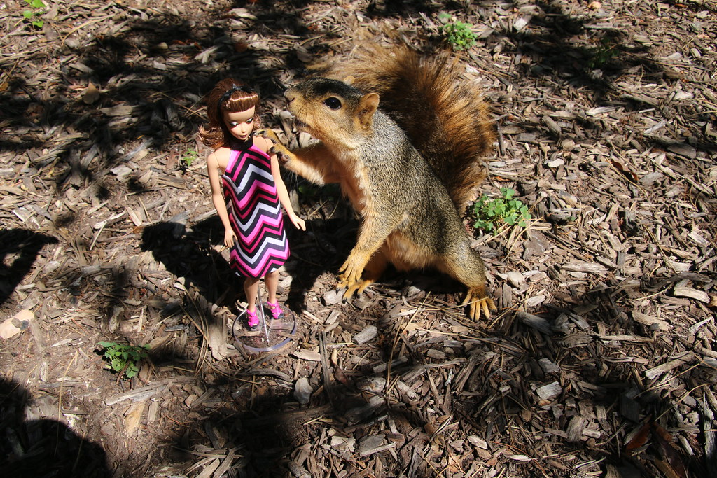 Squirrels and...Barbie!  Taken in Ann Arbor at the University of Michigan (June 30, 2016)