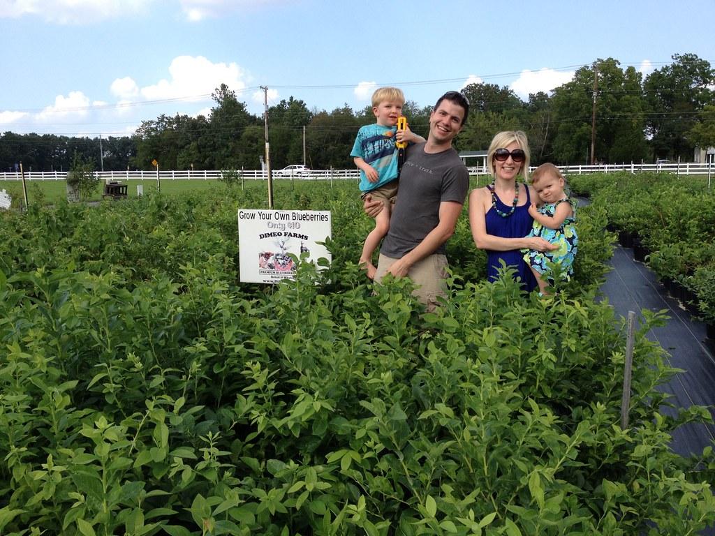 Large Blueberry Plants for Sale - DiMeo Bluebery Farm & Bl