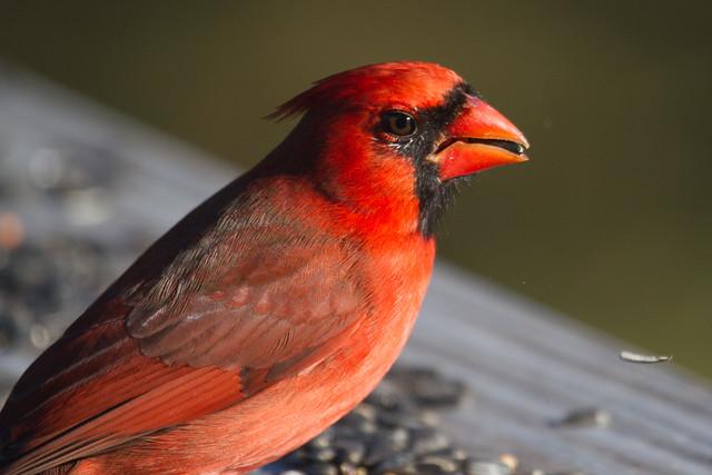 cardinals-11-21-2014-13.jpg